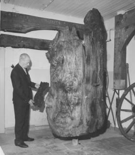 ARH Slg. Bartling 1723, Eichenbrunnen im Kreisheimatmuseum, links davor stehend der Leiter, Lehrer Wilhelm Canenbley, Neustadt a. Rbge., 1970