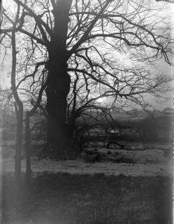 ARH Slg. Grabenhorst 13, Unbekannt, vor 1924