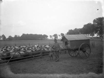 ARH Slg. Grabenhorst 8, Schäfer mit Schäferkarren, vor 1924
